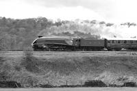 An A4 Locomotive Society railtour from Newcastle approaching Apperley Bridge Junction, east of Shipley, on 30 April 1977 behind 4498 <I>Sir Nigel Gresley</I> [See image 38421]<br><br>[Bill Jamieson&nbsp;30/04/1977]