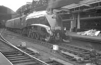 A positively gleaming 60014 <I>Silver Link</I>, photographed at Newcastle Central on 24 June 1961. The A4 is at the head of the 9am London Kings Cross - Edinburgh Waverley.<br><br>[K A Gray&nbsp;24/06/1961]