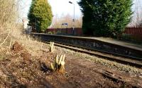 A view from the former Preston bound platform at Croston station on 17 February 2013. As part of a tidy up operation by the station volunteers some of the vegetation is being attacked at the south end of the platform. Once this has been removed it feels like an archeological dig since a few inches beneath the surface the original platform surface is still present and can be seen in the foreground.<br><br>[John McIntyre&nbsp;17/02/2013]