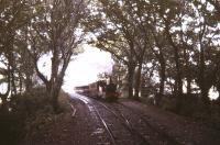 Coming through the woods near Castletown, Isle of Man, in the summer of 1987. <br><br>[Ian Dinmore&nbsp;/08/1987]