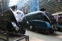Co-located around the NRM turntable, ahead of the speed record breaking 75th anniversary, are repatriated 60008 <I>Dwight D Eisenhower</I> and resident 4468 (60022) <I>Mallard</I>. The now shiny BR Green of 60008 contrasts with the LNER Garter Blue of its sister. The other four surviving A4s will join them later this summer for the full reunion. <br><br>[Mark Bartlett&nbsp;20/04/2013]