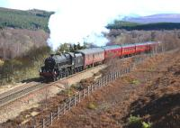 After stalling at the start of the climb up to Slochd Summit, Black 5 no 44871 puts in a forgiving performance as it nears the top on 25 April with the <I>Great Britain VI</I>.<br><br>[John Gray&nbsp;25/04/2013]