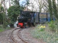 <I>Down among the daffodils</I>. WLLR 0-4-0T <I>Utrillas</I>, was built in Germany in 1913 and previously worked at a mine in Zaragosa, Spain. It is seen here on an springtime evening private charter on 17 April. Fireman John McIntyre ducks back into the cab just as the shutter is pressed.<br><br>[Mark Bartlett&nbsp;17/04/2013]