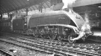 A4 60019 <I>Bittern</I> with a down express passenger train at Newcastle Central around 1958.<br><br>[K A Gray&nbsp;//1958]