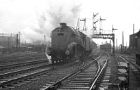 A4 60010 <I>Dominion of Canada</I> is about to pass Stirling South shed on 23 November 1963 shortly after restarting the 7.10am Aberdeen - Glasgow Buchanan Street. Stirling Middle box can be seen through the signal gantry.<br><br>[K A Gray&nbsp;23/11/1963]