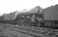 Gresley A3 Pacific no 60092 <I>Fairway</I> standing in the sidings alongside Gateshead shed on 17 October 1964, a week after its withdrawal by BR.<br><br>[K A Gray&nbsp;17/10/1964]