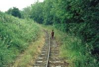Unrestored track on the Welshpool and Llanfair Light Railway between Sylfaen and Welshpool in the summer of 1974.<br><br>[John Thorn&nbsp;//1974]