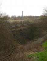 First signs of spring? Wild primroses and a solitary OHLE mast appear on the embankment near Baillieston in mid February. Electrification of the Whifflet line is due to be completed by the summer of 2014.<br><br>[Colin McDonald&nbsp;/02/2014]