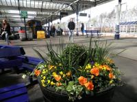 Platform scene at Kilmarnock Station in spring sunshine on 14 April. The 13.42 ex-Glasgow Central has recently arrived at platform 2. The colourful half-barrels here are lovingly maintained by the Hurlford Gardening Club. <br><br>[John Yellowlees&nbsp;14/04/2014]