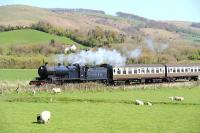 Ex-Somerset & Dorset Railway 2-8-0 no 88 startles the spring lambs in a field near Williton on 13 April 2014 with a train heading west towards Minehead.<br><br>[Peter Todd&nbsp;13/04/2014]