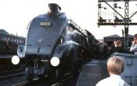 Saturday 3 September 1966 at Buchanan Street, with 60019 <I>Bittern</I> preparing to take out the last A4 hauled BR service to Aberdeen.<br><br>[G W Robin&nbsp;03/09/1966]