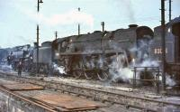 A busy scene in the shed yard at Polmadie in the summer of 1964. Centre stage is Britannia Pacific 70035 <I>Rudyard Kipling</I>, flanked by BR Standard tanks 80086 (left) and 80001. <br><br>[John Robin&nbsp;13/06/1964]