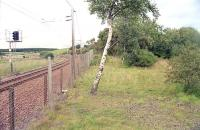 View north at Silvermuir South Junction in 2000. The Glasgow fork is to the left and the trackbed of the Edinburgh fork to the right. [Ref query 8859]<br><br>[Ewan Crawford&nbsp;//2000]