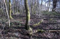 Still partly visible on 4th March 2015 in the woodland which has grown up on the site of the east end of Aberfoyle station, the circle of concrete marks the location of the old turntable. [See image 20597]<br><br>[Colin McDonald&nbsp;04/03/2015]