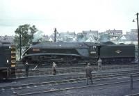 60019 <I>Bittern</I> in the shed yard at Ferryhill on 3 September 1966 being prepared for the return leg of the BR 'A4 Farewell Tour' to Buchanan Street.<br><br>[John Robin&nbsp;03/09/1966]