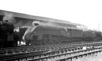 Smoke and steam abound in this scene in Gateshead shed yard on a sunny morning in the summer of 1963. The A4 Pacific is locally based example 60020 <I>Guillemot</I>.<br><br>[K A Gray&nbsp;//1963]