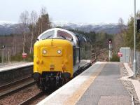 Deltic 55003 <I>Meld</I> at Carrbridge on 27 April 2015. The locomotive was on its way from Glasgow to Inverness where it will haul the Inverness - Kyle of Lochalsh return leg of the <I>'Great Britain VIII'</I> railtour. This is one of the changes resulting from the current suspension of WCRC from the national network.<br><br>[Gus Carnegie 27/04/2015]