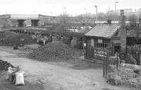 The coal drops alongside Hexham station in March 1985. View west towards Carlisle.<br><br>[Bill Roberton&nbsp;09/03/1985]