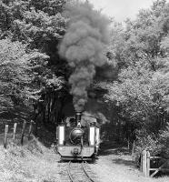 When expertly handled, oil-firing should be virtually smoke-free, but fortunately for the photographer this is not always the case! No. 9 <I>Prince of Wales</I> clags its way out of the woods high above the River Rheidol near Rhiwfron Halt with the morning Aberystwyth - Devil's Bridge working on 29th May 1984.<br><br>[Bill Jamieson&nbsp;29/05/1984]