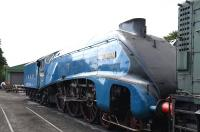 A4 Pacific 4464 <I>Bittern</I> stabled on Ropley Shed in July 2015.<br><br>[Peter Todd&nbsp;19/07/2015]