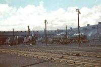 General view over the shed yard at Polmadie in July 1961.<br><br>[John Robin&nbsp;/07/1961]