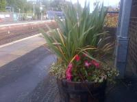 Late blooming flowers adorn the southbound platform at Barrhead and, across the way, a Sprinter rests in the bay platform.<br><br>[John Yellowlees&nbsp;22/10/2015]