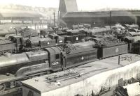 A general view over the crowded shed yard at Eastfield on 4 July 1955. Nearest the camera stands resident D11 4-4-0 no 62675 <i>Colonel Gardiner</I>.<br><br>[G H Robin collection by courtesy of the Mitchell Library, Glasgow&nbsp;04/07/1955]