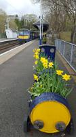 A barrel planter at Milngavie station, where it all began for Railscot. (The first page was on the Glasgow and Milngavie Junction Railway.)<br><br>[John Yellowlees&nbsp;22/04/2016]
