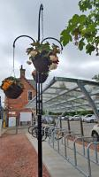 A basket tree and the new cycle shelter at Uddingston<br><br>[John Yellowlees&nbsp;14/06/2016]