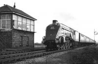 A4 60019 <I>Bittern</I> heading north past Reston Junction signal box on 4 November 1967 with an RCTS  (West Riding Branch) special from Leeds City to Edinburgh. <br><br>[Dougie Squance (Courtesy Bruce McCartney)&nbsp;04/11/1967]