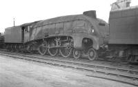 Gresley A4 Pacific 60015 <I>Quicksilver</I> photographed on Doncaster shed in 1961.<br><br>[K A Gray&nbsp;//1961]