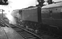 60019 <I>Bittern</I> prepares to take an ECML service out of Newcastle Central in 1961. <br><br>[K A Gray&nbsp;//1961]