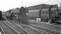 A3 Pacific no 60065 <I>Knight of Thistle</I> stands on the centre road at Doncaster station on 31 May 1963, having recently brought in the 8.10am Kings Cross - Hull.<br><br>[K A Gray&nbsp;31/05/1963]