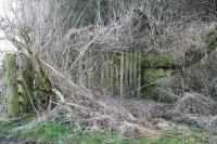 The remains of the wooden gate at the foot of the steep pathway leading to the up platform at Charlesfield; still visible through the undergrowth on the east side of the bridge in February 2017.<br><br>[John Furnevel&nbsp;14/02/2017]