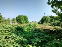 It looks like the trucks in the foreground have been abandoned to their fate on this now disused line. Further back thick vegetation surrounds them and saplings of several years old are even growing through them.<br><br>[David Panton&nbsp;25/05/2017]
