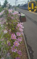 A lovely clematis on the southbound platform at Bridge of Allan.<br><br>[John Yellowlees&nbsp;04/07/2017]