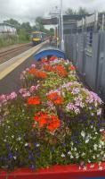 Alloa with the planters looking fine.<br><br>[John Yellowlees&nbsp;04/07/2017]