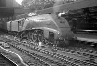 A4 60023 <I>Golden Eagle</I> photographed in 1961 with a train at Newcastle Central. <br><br>[K A Gray&nbsp;//1961]