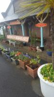 Chathill, with one or two plants on the platform ...<br><br>[John Yellowlees&nbsp;22/06/2017]