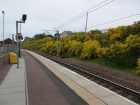 Merryton Station 6 and a half years after opening, the lovely coloured Broom in full bloom.<br><br>[Gordon Steel&nbsp;28/05/2012]