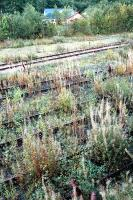 Blair Atholls sidings are getting into a bit of a state. Looking south from footbridge.<br><br>[Ewan Crawford&nbsp;//]