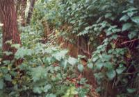 Overgrown remains of the platform at Campsie Glen - now gone.<br><br>[Ewan Crawford //1987]